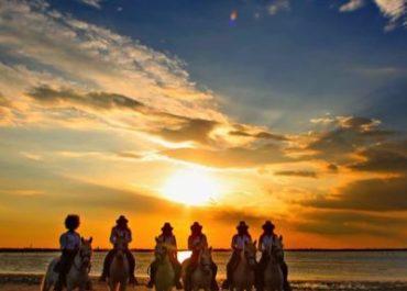 Balade à cheval sur les plages du gard, de l'hérault - camargues